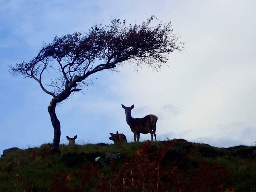 Faith in Nature - deer