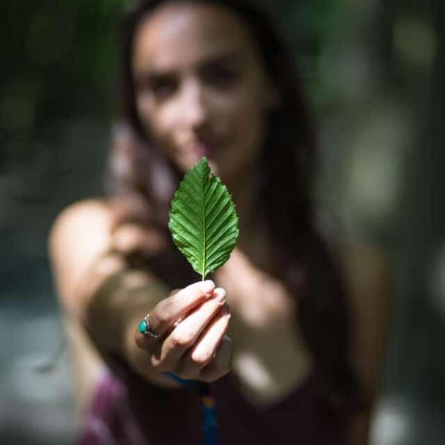 Salix Leaf - No Trace