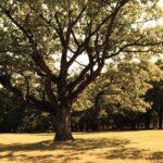 bomen slider achtergrond - No Trace