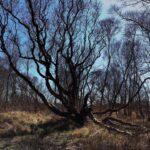 Kelten en druiden - No Trace
